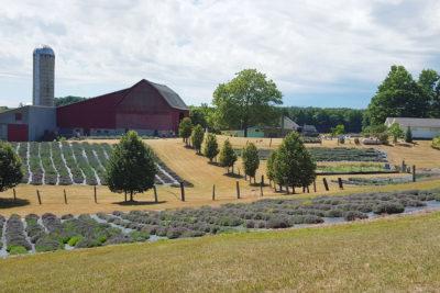 Spring at Lavender Hill Farm