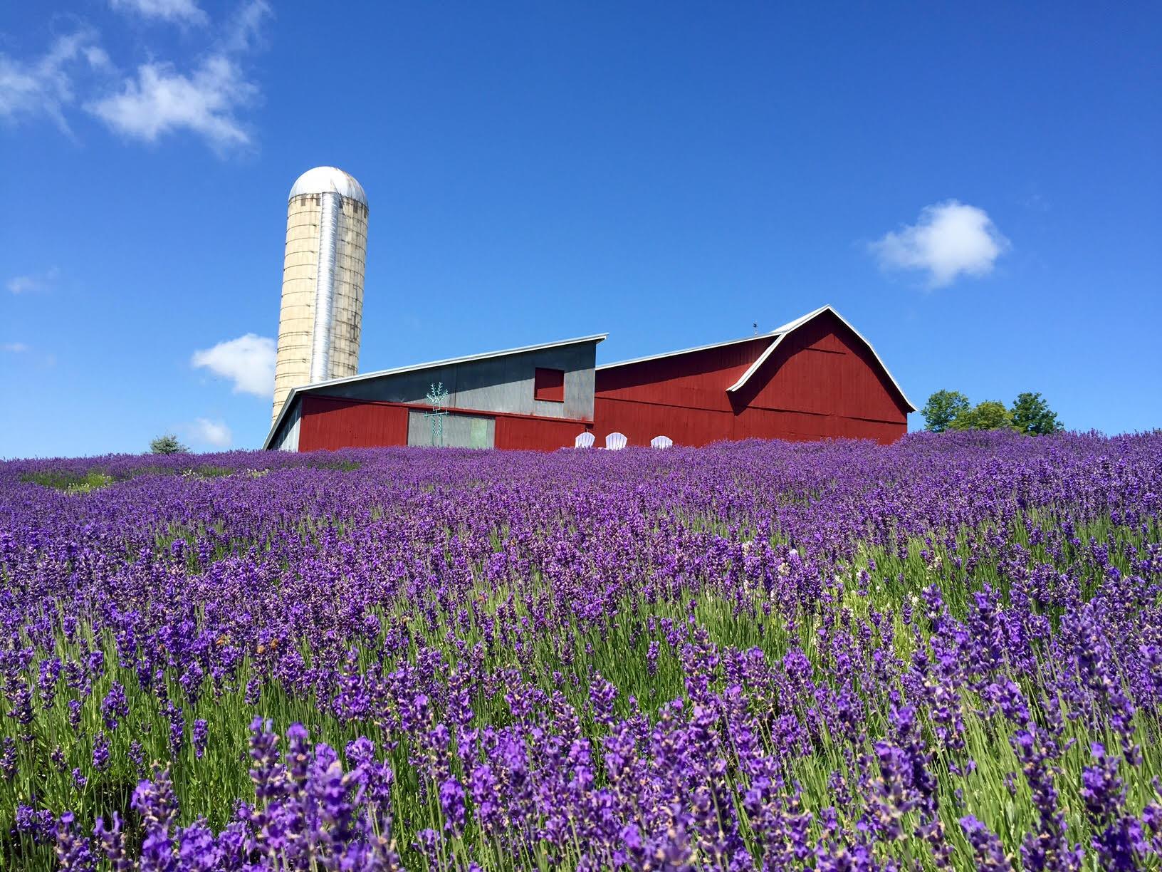 Lavender Hill Farm – Boyne City Michigan | Since 2003