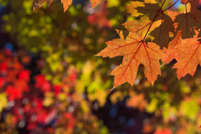 Why We Visit Northern Michigan in October